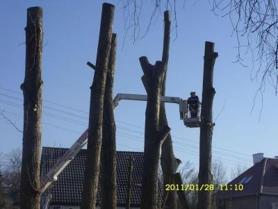 ścinanie drzew