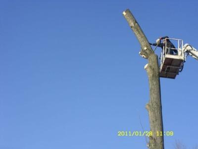 ścinanie drzew 2